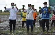 Gubernur Kalteng dan Menteri Pertanian Tanam Padi Serentak di Pulpis