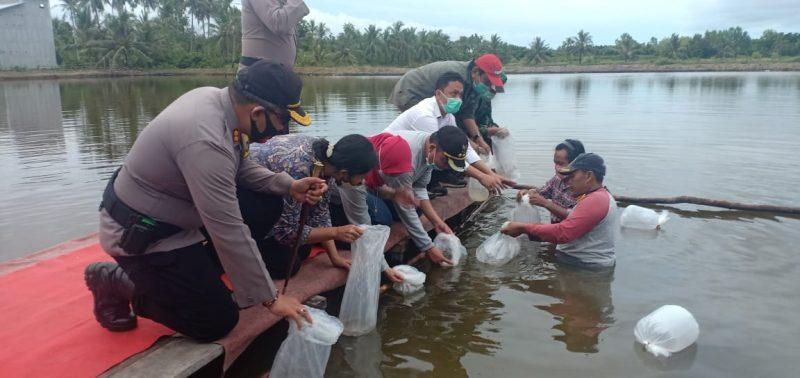 Bupati Tebar 76 Ribu Benih Udang di Tambak Tradisional Masyarakat