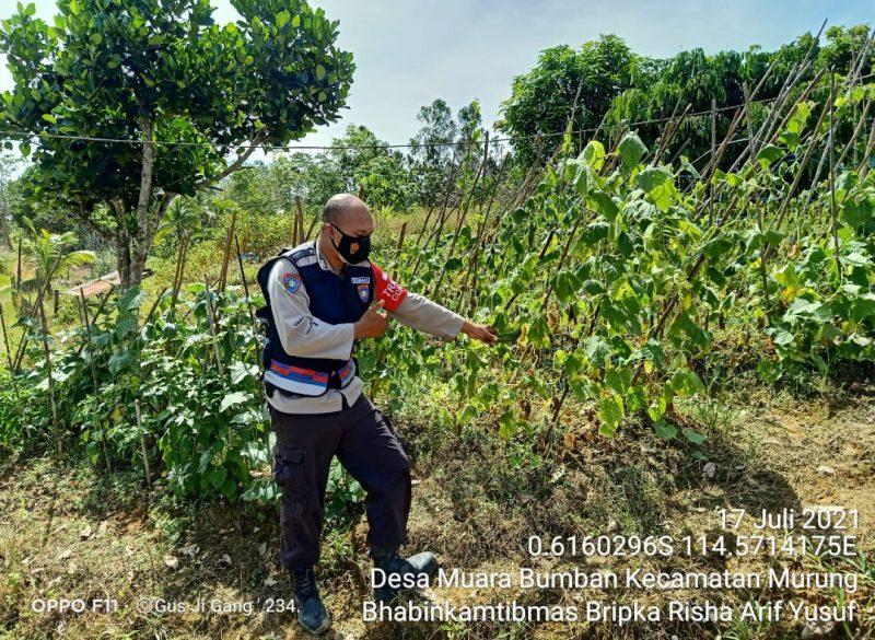Sambagi Petani di Kawasan Perkebunan Lewu Isen Mulang