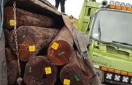 Ungkap Tuntas Pengangkutan Kayu Log di Kalteng